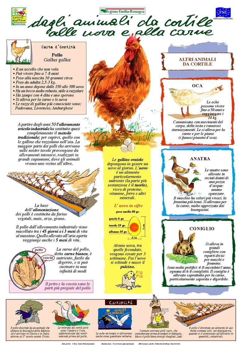 Dagli animali da cortile alle uova e alla carne