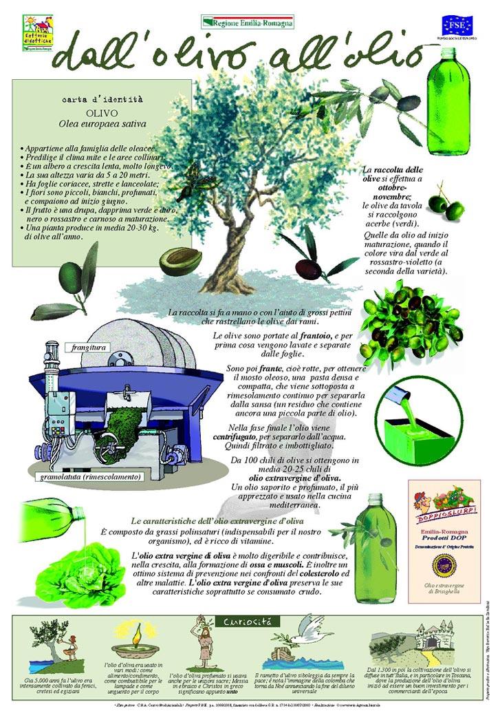 Dalle olive all'olio
