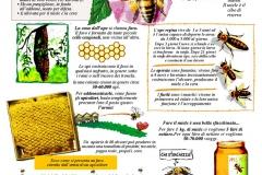 Dalle api al miele