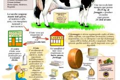 ala vacca al latte e al formaggio
