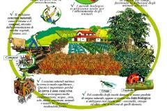 L'agricoltura biologica