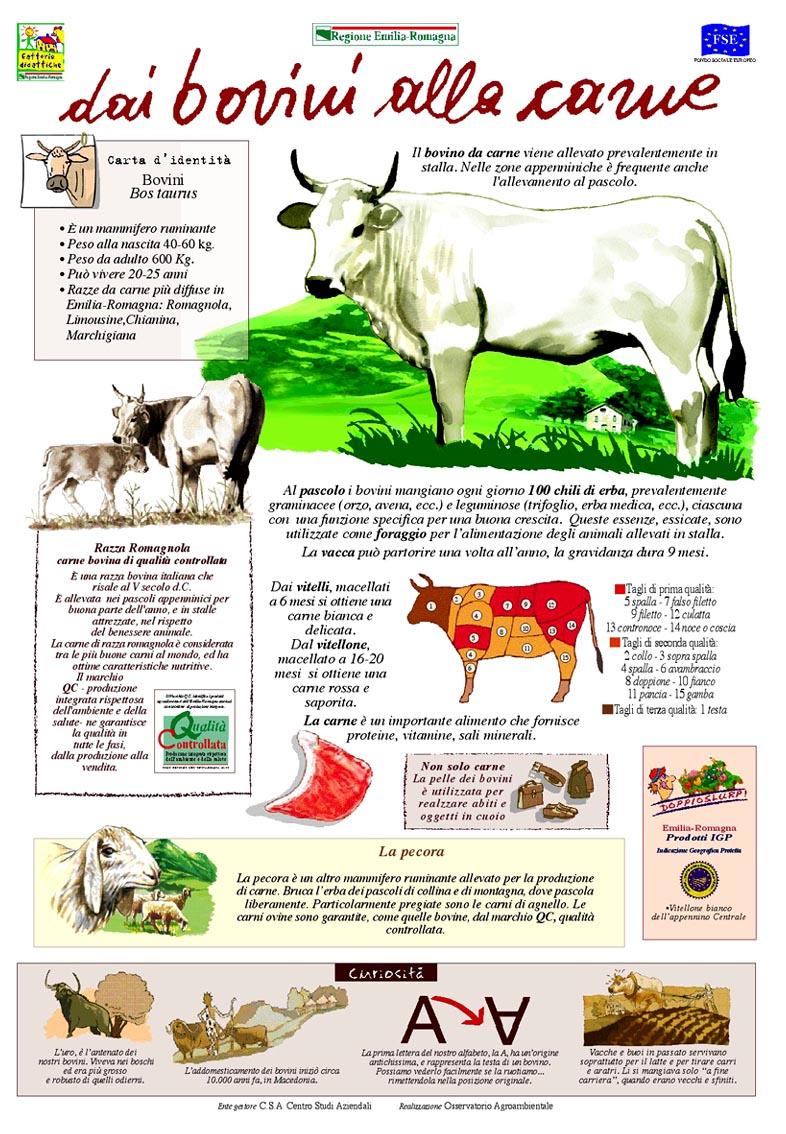Dai bovini alla carne