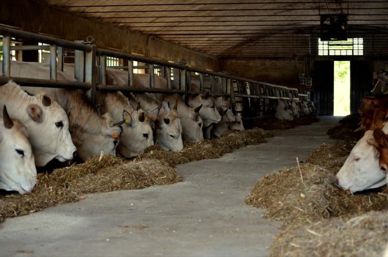 Avviso pubblico per aziende agricole biologiche o biodinamiche con allevamento