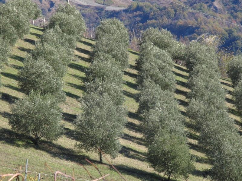 Giornata Aperta delle Fattorie Didattiche del Veneto